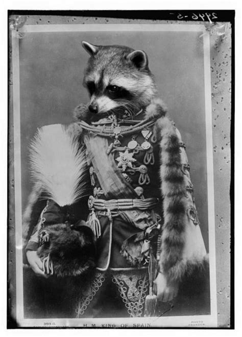 General Raccoon ? 1Funny.com