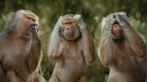 Funny Monkey Pictures Wallpapers Wallpapersafari