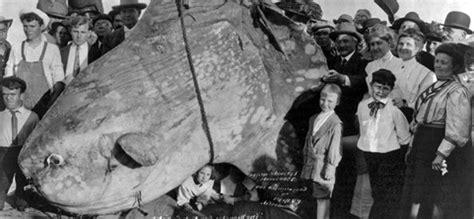 grants  historical marine ecology marine conservation