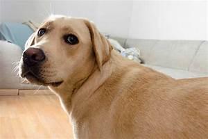 狗狗也有月子餐?該怎樣吃才對?   寵物迷 Petmily