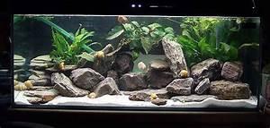 Aquarium Einrichten Beispiele : ideales as becken aquarienforum ~ Frokenaadalensverden.com Haus und Dekorationen