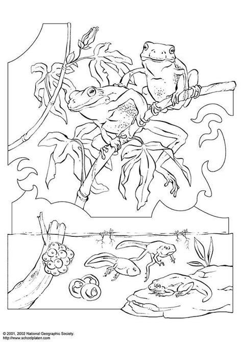 dibujo  colorear rana de san antonio dibujos