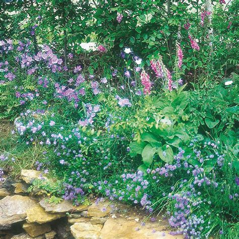 wildflower woodland mixture mr fothergill s flower seeds