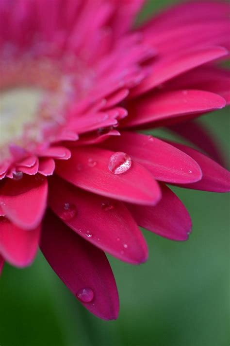 macro flower photography ideas  pinterest