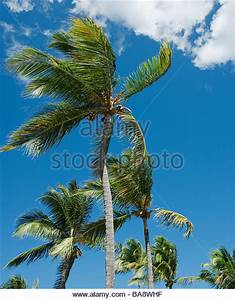 Trees Blowing Wind Stock Photos & Trees Blowing Wind Stock ...
