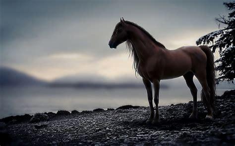 Horse Full Hd Wallpaper And Hintergrund
