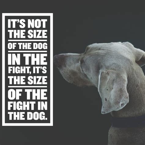 dog quotes  sayings  dog lovers  understand