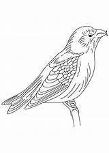 Coloring Blackbird Winged Designlooter sketch template