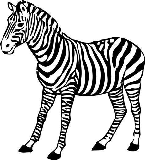 gallery zebra cartoon black  white