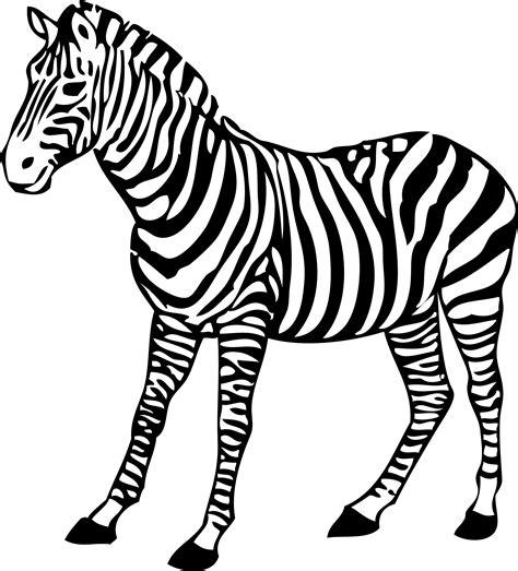 zebra clipart black  white clipart panda