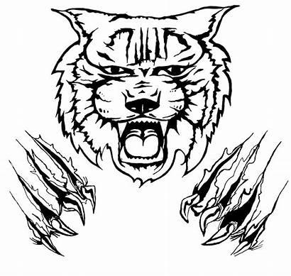 Line Drawing Clip Worksheet Face Kindergarten Tiger