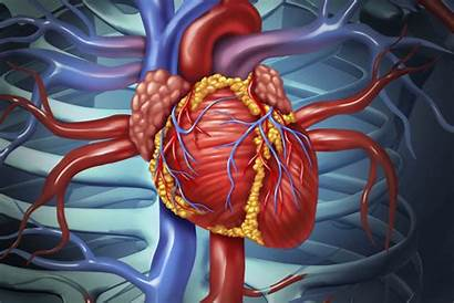 Disease Cardiovascular Heart Risk Early Factors Cardio
