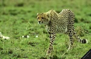 Temperate Grasslands African Grasslands
