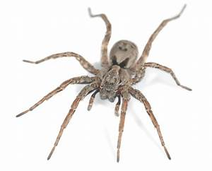 House Spiders and Other Spider Infestation Problems
