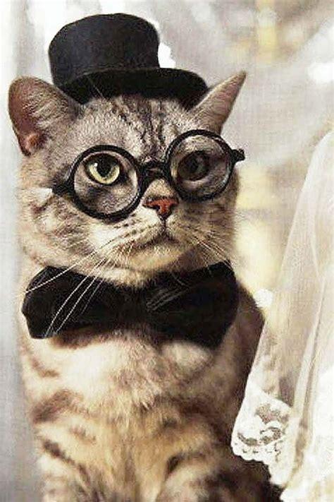 images  cats  glasses  pinterest cats