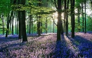 woods wallpaper 1080p