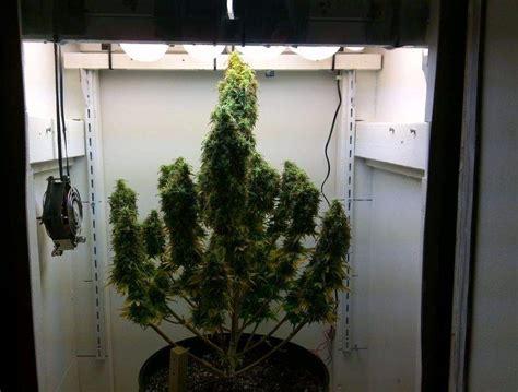 construction chambre de culture tout ce que vous devez savoir pour cultiver du cannabis