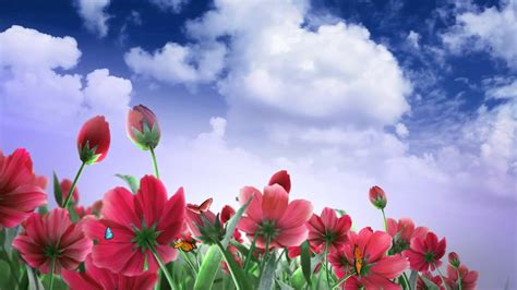 Blue Cherry Blossom Wallpaper Flower Butterfly And Cloud Video Background Hd 1080p Youtube
