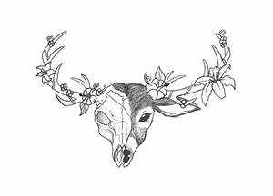 Deer skull drawing | My dear deer | Pinterest | Skull ...