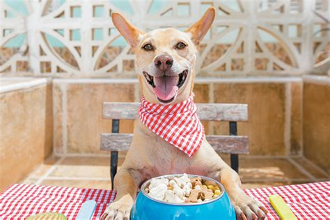 lets talk dog nutrition  essential nutrients dogs
