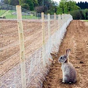 best rabbit fencing how to keep rabbits out of garden best expert tips every gardener must