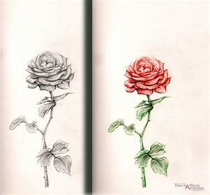 rose drawing | The Earth Without Art Is Just Eh ...