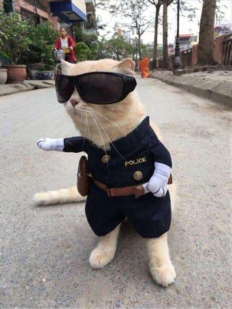 epic pix  gag  funny police cat