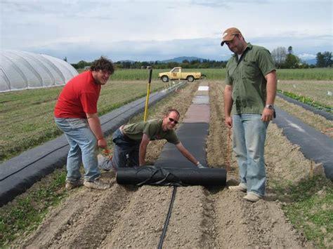 drip irrigation mulch plastic mulches plasticulture washington state university