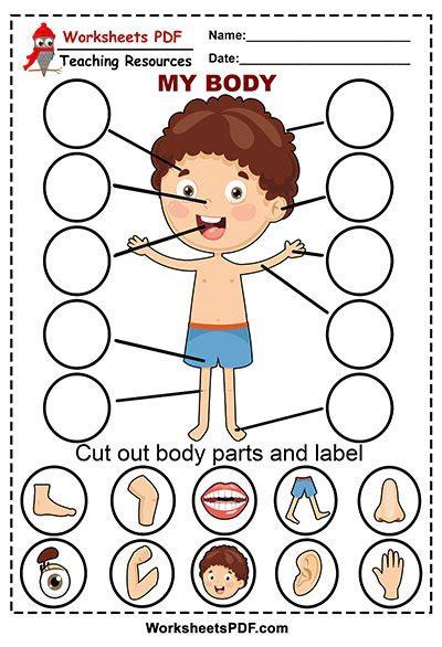 human body parts  printables worksheets