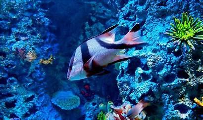 Wallpapers Aquatic Animals Ocean Sea Cave