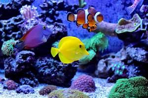 Fische Aquarium Hamburg : tolle informationen ber aquarium fische erfahren sie ~ Lizthompson.info Haus und Dekorationen