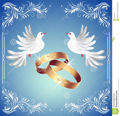 wedding rings   doves stock images image