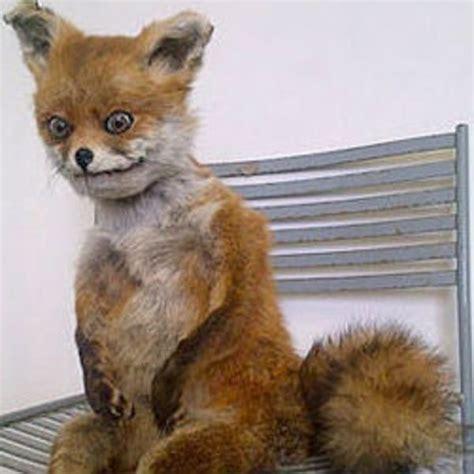 Taxidermy Fox Meme - stoned fox упоротая лиса know your meme