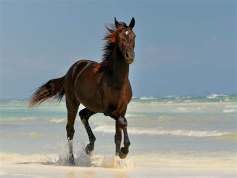 cool horse horses wallpapers wallpapersafari forwallpapercom