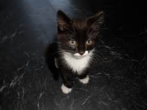 Black and White Fluffy Cat