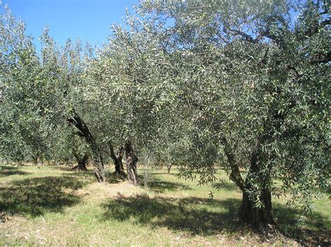 la cuisine d olivier les oliviers de provence en sortant de l 39 école