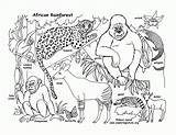 Coloring Pages Rainforest Printable Animal sketch template