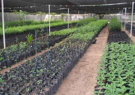 Forestación Y Reforestación Urbana Y Sub Urbana