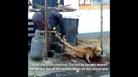 petition  animal cruelty illegal  china changeorg
