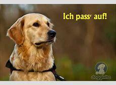 Viele lustige Hundebilder auch zum gratis Runterladen
