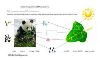 Similiar Photosynthesis And Cellular Respiration Chart Keywords