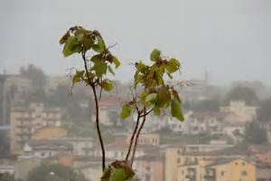 Bäume Beschneiden Jahreszeit : trompetenbaum krankheiten erkennen und behandeln ~ Yasmunasinghe.com Haus und Dekorationen
