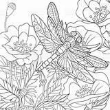 Coloring Dragonfly Adult Insect Flying Cartoon Poppy Sheets Colouring Stylized Drawn Animal Colors sketch template