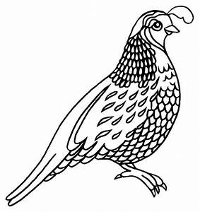 Quail Coloring Pages for Preschool - Preschool and ...