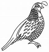 Quail Coloring Missouri Pages Preschool Bird Quails Bobwhite Animal Stencil Badge Kindergarten Tattoo Printable Patterns Preschoolcrafts Colorluna Drawings Easy Houses sketch template