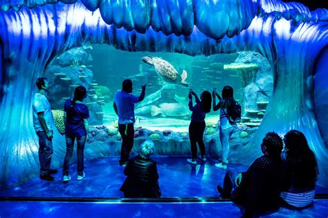 Sea Life Sydney Aquarium | Best things to do with kids ...