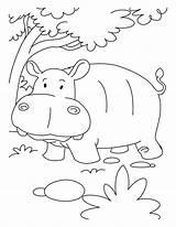 Hippopotamus Hippo Hippopotame Nilpferd Kolorowanki Hipopotamo Hipopotam Jumgle Kolorowanka Druku Hipopotamos Dibujos Coloriages Coloringhome sketch template