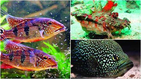 learn   marine life   fish exhibition