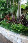 25+ Best Ideas about Tropical Pool Landscaping on tropical garden design