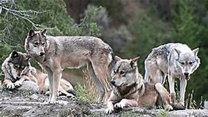 Life In The Taiga : animals of the taiga eniscuola ~ Frokenaadalensverden.com Haus und Dekorationen